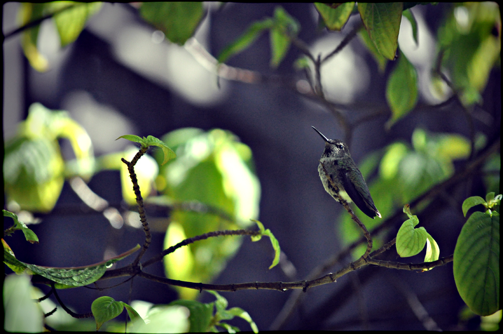 http://www.erinkoski.com/images/1000_b_bird001_a.jpg