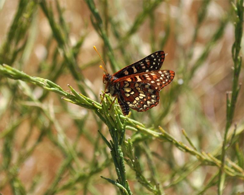 http://www.erinkoski.com/images/Butterfly001.jpg