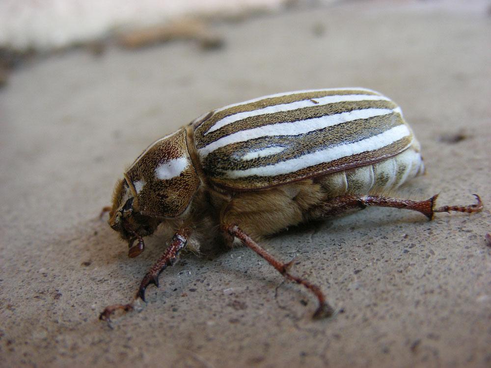 http://www.erinkoski.com/images/CA93023-beetle08-15-09c.jpg