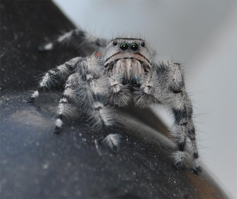 http://www.erinkoski.com/images/Spider002.jpg